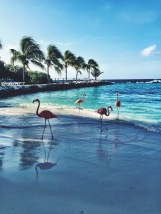 Aruba – photographer: s.simpson for Paintitmermaid.com. all rights reserved.
